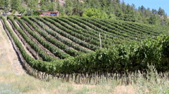 Vineyard British Columbia Canada Stock Footage