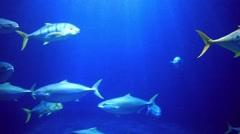 Fish swim underwater with rays of sun Stock Footage
