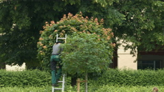 Man coming down the ladder and cleaning a tree in Munich - stock footage