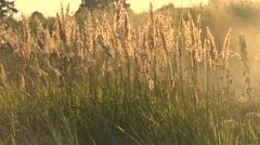 Grass and dust in the wind Stock Footage