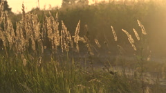 Grass and dust in the wind - stock footage