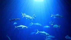 Fish swim underwater with rays of sun Stock Footage