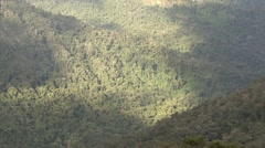 Rainforest canopy in Madagascar 2 Stock Footage