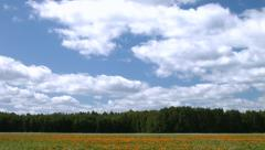 Timelaps with the field with a flowers - stock footage