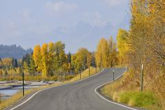 Country Road with American Aspens (Populus tremuloides) in Autumn Foliage, Grand Stock Photos