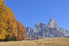 European Larch Trees and Cimon della Pala, Autumn, Passo Rolle, Parco Naturale Stock Photos