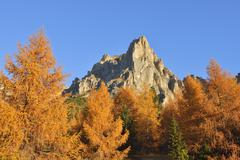 Mountain Peak with European Larch Tree (Larix decidua) in Autumn Foliage, - stock photo