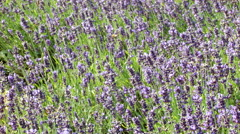 Many flowers on the meadow Stock Footage
