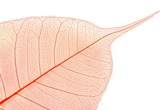 Dry color leaves on white background Stock Photos