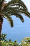 Palm tree and Sea View Stock Photos
