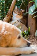 Portrait of a cute little cat and dog - stock photo