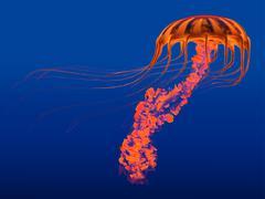 Orange Glowing Jellyfish - stock illustration