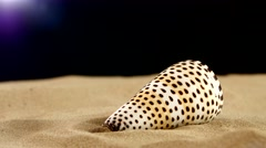 Tiger sea shell with sand, flyspecked, on black, back light, rotation Stock Footage