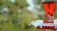 Single Hummingbird at Feeder Stock Footage
