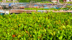 Lake Toba with fishing cages and Water Hyacinth. 4K resolution. Stock Footage