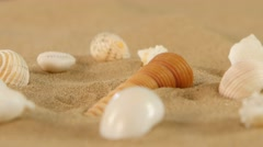 Different sea shells on beach sand, rotation, close up Stock Footage
