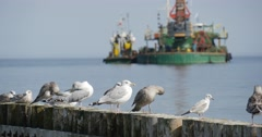 Seagulls Sit On The Breakwater In The Foreground Close View Barge Works At The Stock Footage