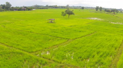 Aerial Shot rice field Stock Footage