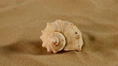 Side of usual marine seashell on sand, rotation, close up Stock Footage