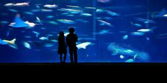 People in an aquarium Stock Photos
