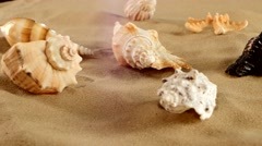 Side of different sea shellsand starfish on beach sand, black, rotation Stock Footage