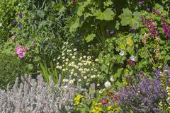 Herbaceous flower bed - stock photo