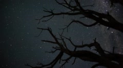 A dead Acacia Tree, silhouetted against the African night sky Stock Footage