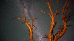 A dead Acacia Tree Stock Footage