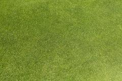 Golf green grass background on a bright day - stock photo
