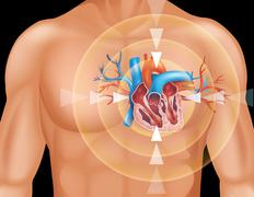 Human heart in close up diagram - stock illustration