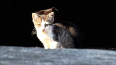 Kitten sitting in the sunlight Stock Footage