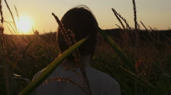 Rear view of young man walking through a corn field during sunrise. Stock Footage