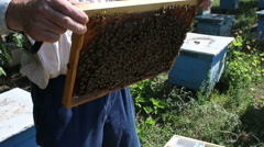 Beekeeper collecting honey in the garden from bee apiary - stock footage