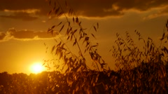 Golden hours sun set south france clouds herbs wind Stock Footage