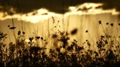 Golden hours sun set south france clouds herbs closeupshot Stock Footage