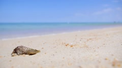 Untouched Tropical Beach with Shell in Thailand - stock footage