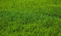 Beautiful green grass background Stock Photos