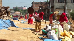 Unidentified women working with crops in Bungamati, Nepal Stock Footage