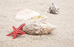seashells on white sand - stock photo