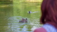 Mallard ducks swiming on pond Stock Footage