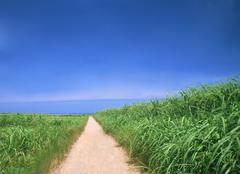 Winding Path in a Green grass Stock Photos