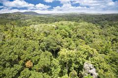 Canopy of rainforest - stock photo