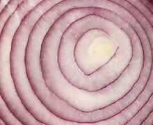 Sliced red onion on white background Stock Photos