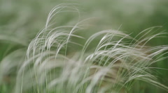 Wind rustles the grass in field green background macro close up Stock Footage