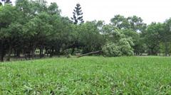 Park Fallen Tree Damage After Tropical Storm Hits Taiwan Typhoon Soudelor 4K-Dan Stock Footage