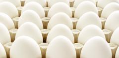 Chicken egg background - stock photo