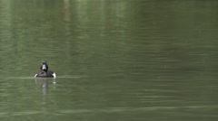 Ducks swimming in the water in the English Garden, Munich Stock Footage