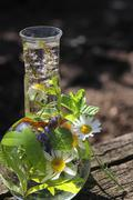 Healthy with homeopathy - stock photo