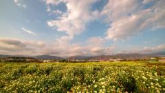 Fields of flowers with mountains timelapse 4k Stock Footage