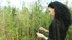 Agronomist with tablet  in Cannabis Marijuana field 02 Stock Footage